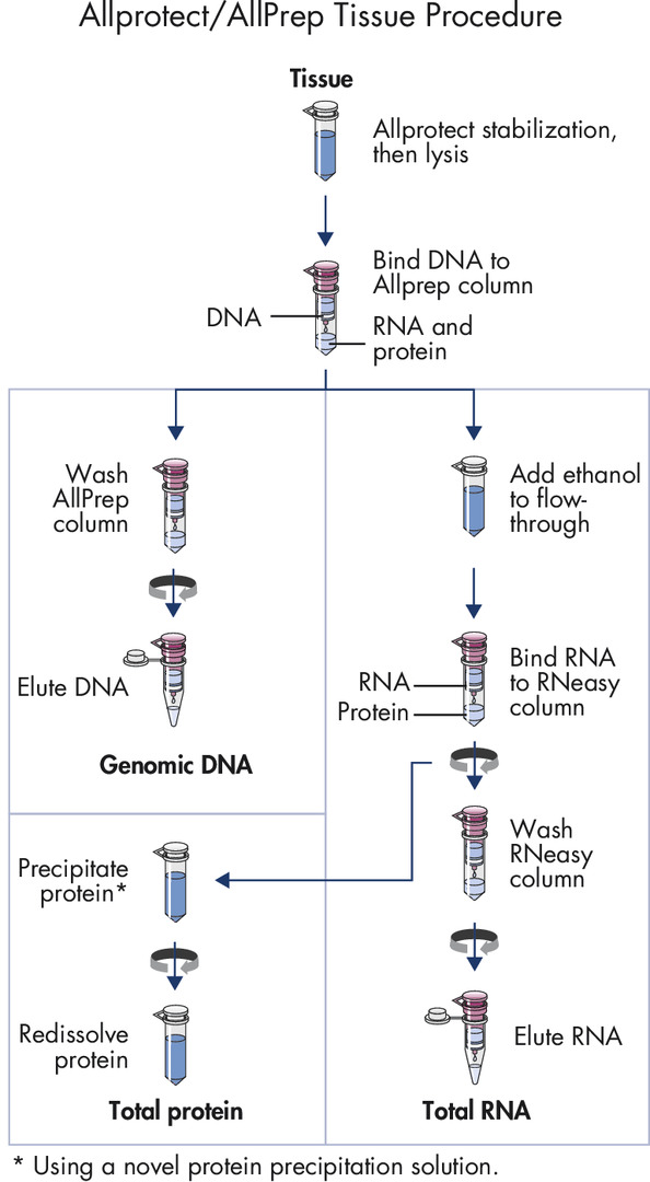 AllPrep DNA/RNA/Protein procedure.