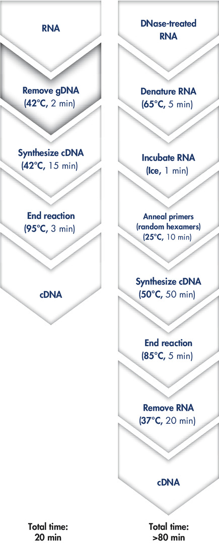 Fast and convenient cDNA synthesis.