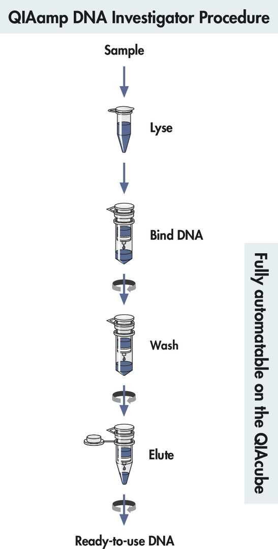 QIAamp DNA Investigator procedure.