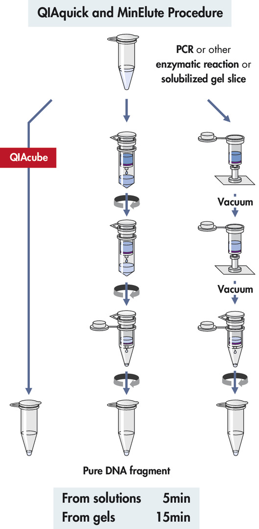 QIAquick and MinElute procedure.