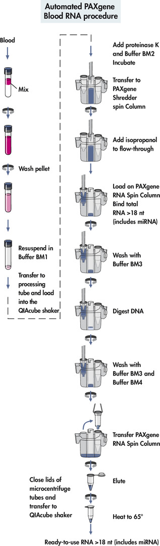 Automated PAXgene Blood RNA procedure.