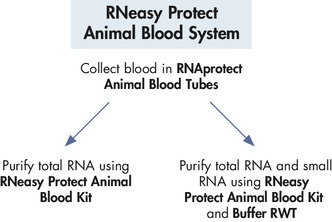 <p>RNeasy Protect Animal Blood flowchart.</p>