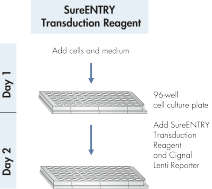 Simple procedure with SureENTRY Transduction Reagent.