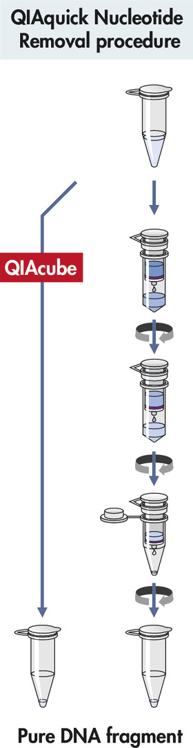 QIAquick Nucleotide Removal procedure.