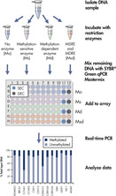 Schematic view of the EpiTect Methyl II PCR Array System procedure.