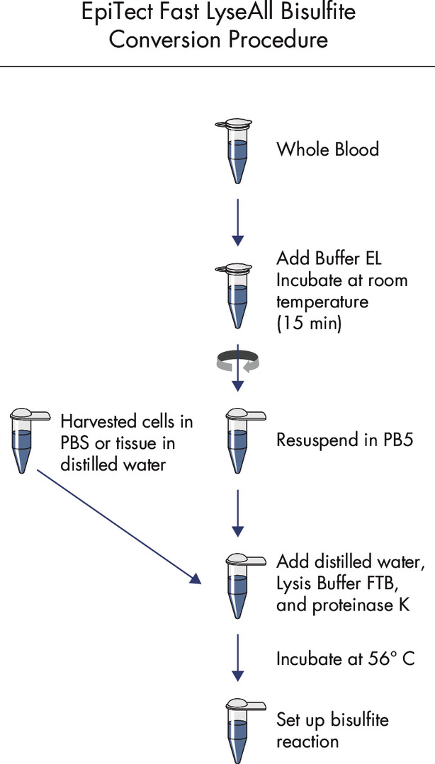 <p>EpiTect Fast 96 LyseAll Bisulfite Kit procedure.</p>