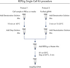 <p>REPLI-g Single Cell Kit procedure.</p>