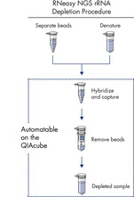<p>GeneRead rRNA Depletion Kit procedure.</p>