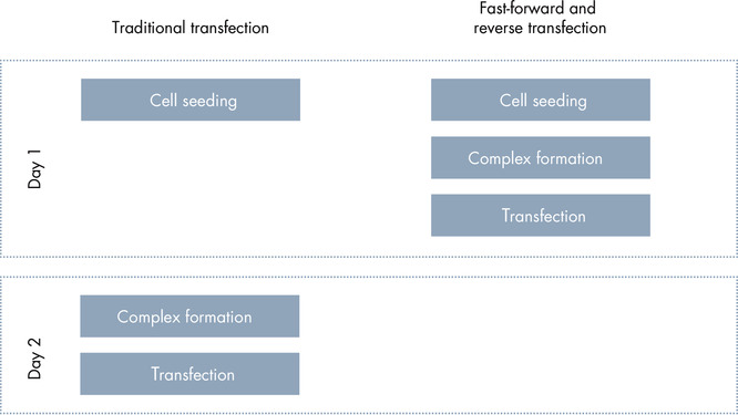 Fast forward and reverse transfection