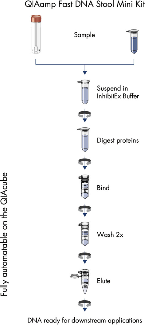 Streamlined procedure of the QIAamp Fast DNA Stool Mini Kit.