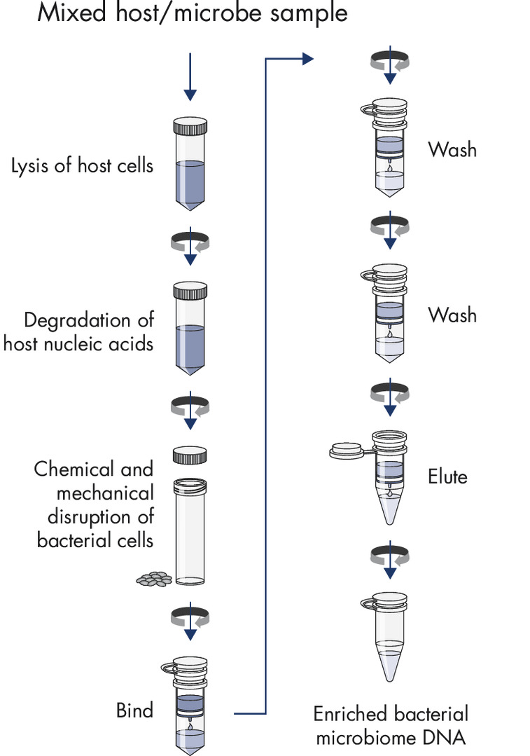 Purification procedure with integrated host DNA removal.