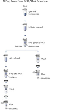 The AllPrep PowerFecal DNA/RNA Kit procedure.