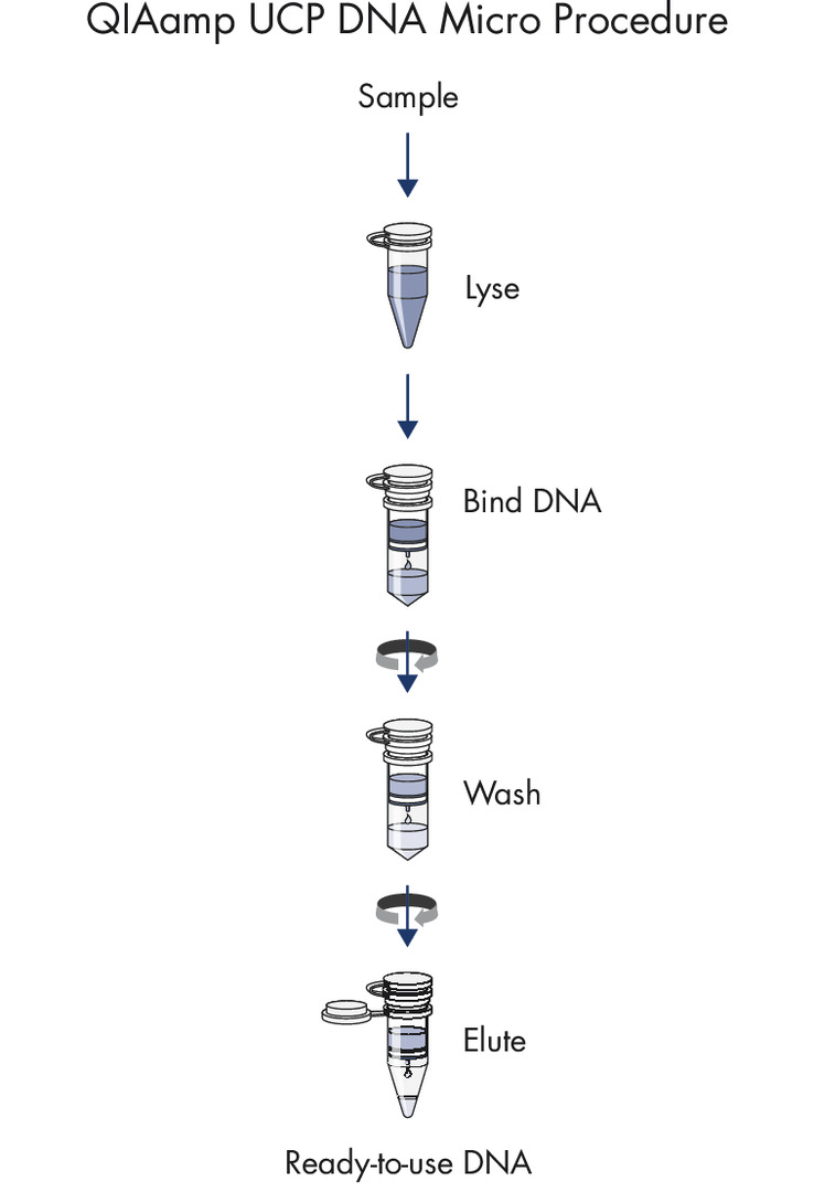 The QIAamp UCP DNA Micro procedure.