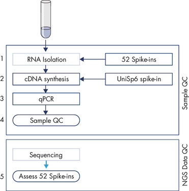 Protocol overview of the QIAseq miRNA Library QC PCR procedure.