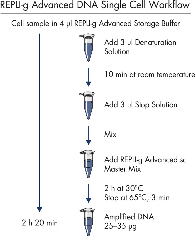REPLI-g Advanced DNA Single Cell workflow.
