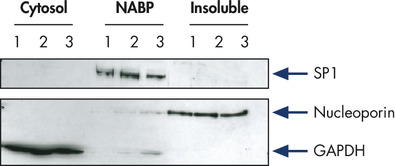 <p>Reproducible, efficient separation of marker proteins.</p>