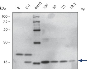 /nl/shop//protein-and-cell-assays/penta-his-biotin-conjugate/