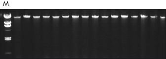 Reproducible purification of archive-quality DNA.