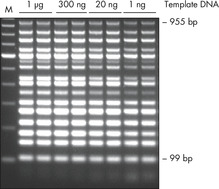 Efficient 16plex PCR.