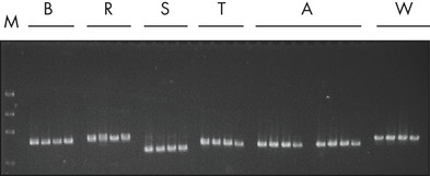 Successful PCR analysis.