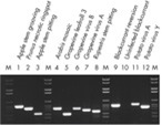 Detection of viruses from a variety of plant species by RT-PCR