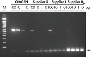 Highly specific RT-PCR using low amounts of template.