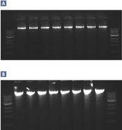 Reproducible purification of high-quality DNA.