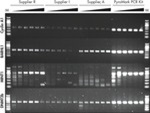 Superior PCR results with PyroMark PCR Kit
