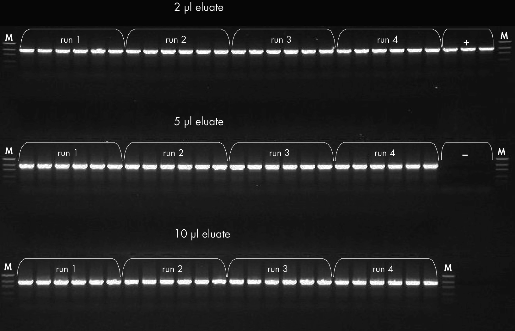 Effects of eluate volume used in PCR on PCR performance