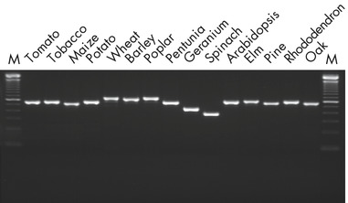 PCR analysis.