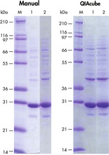 Highly reproducible protein purification.