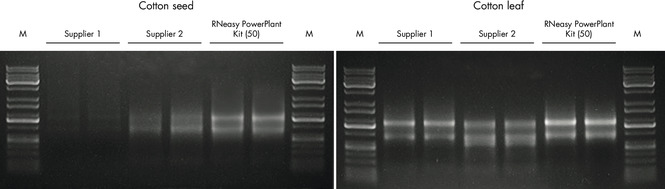 Figure 1. Higher yields of intact RNA from tough plant samples with the RNeasy PowerPlant Kit.