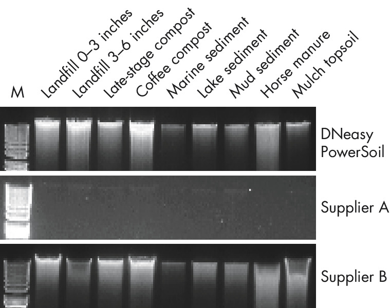 Figure 1: Isolation of high-quality genomic DNA.