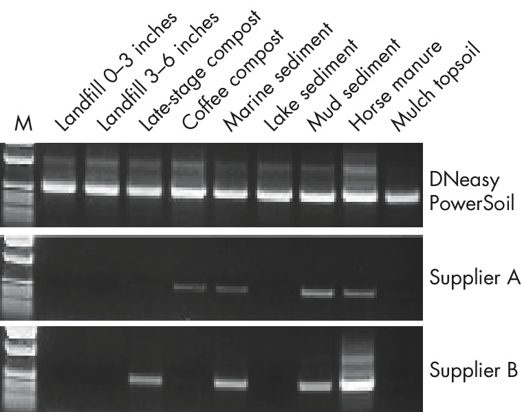 Figure 2: Reliable PCR analysis with the DNeasy PowerSoil Kit.