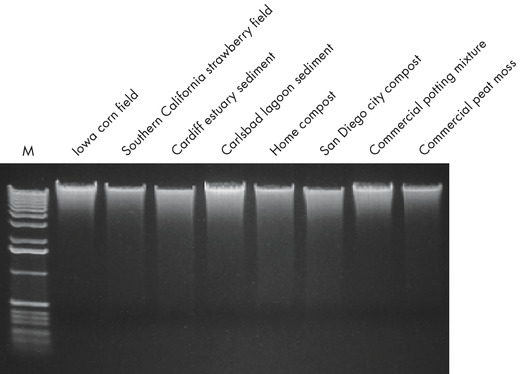 Figure 1. Total genomic DNA isolated from any soil type.