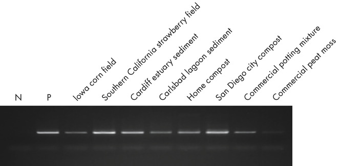Figure 2. More amplified DNA across soil types.