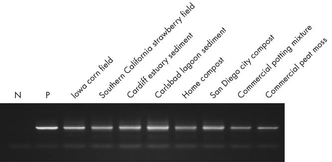 Figure 3. DNeasy PowerMax Soil Kit isolated total genomic DNA.