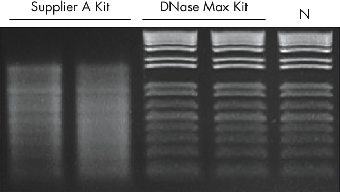 Figure 3: Complete removal of DNase with DNase Max Removal Resin.