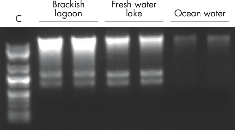 Figure 2. Higher DNA and RNA yields from water samples.