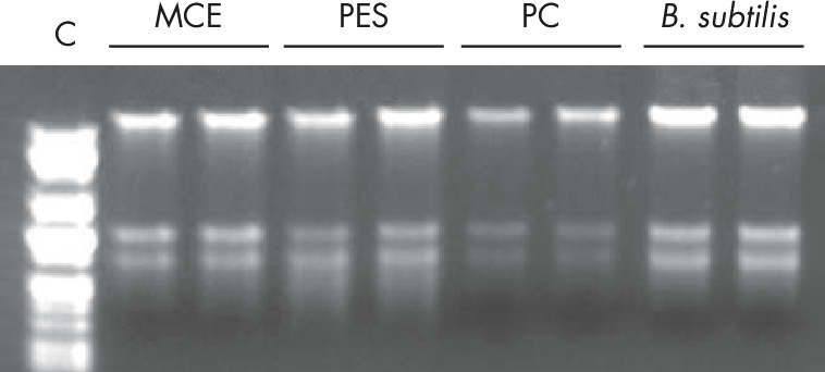 Figure 3. Efficient extraction of nucleic acids from a variety of membrane types with MagAttract PowerWater DNA/RNA Kit.