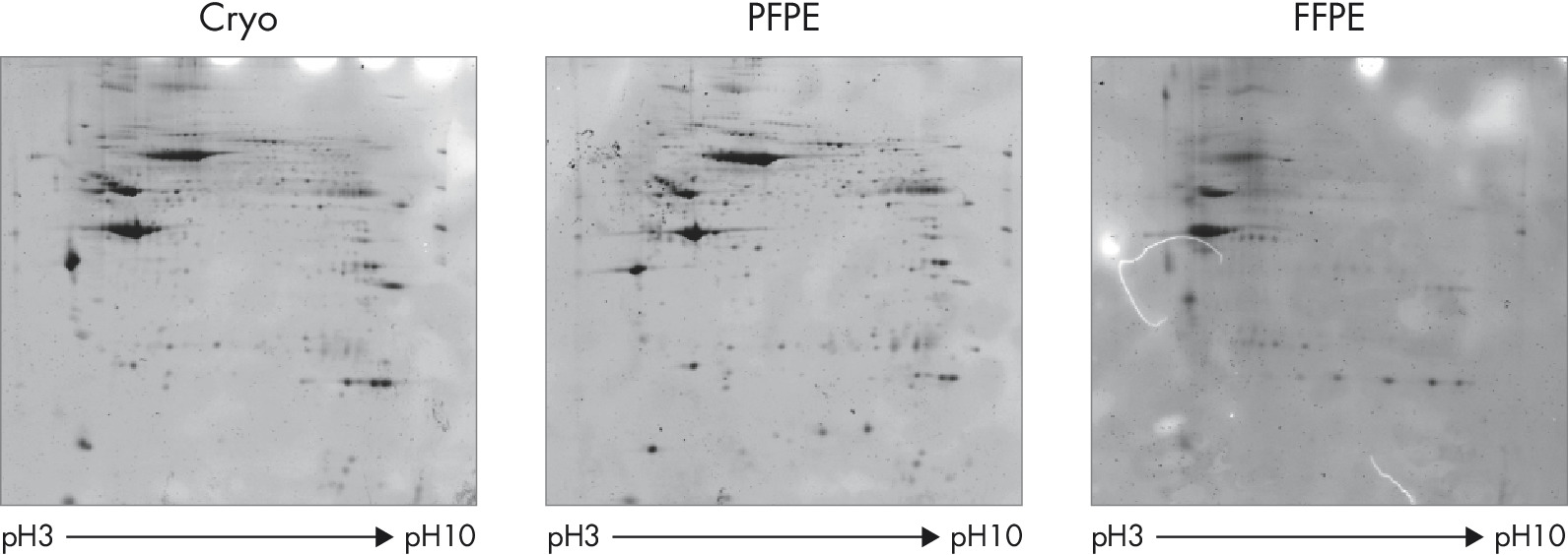 Protein extracted from PFPE tissue is suitable for two-dimentional gel electrophoresis.
