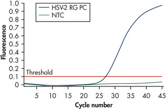 Detection of the HSV-2 positive control.