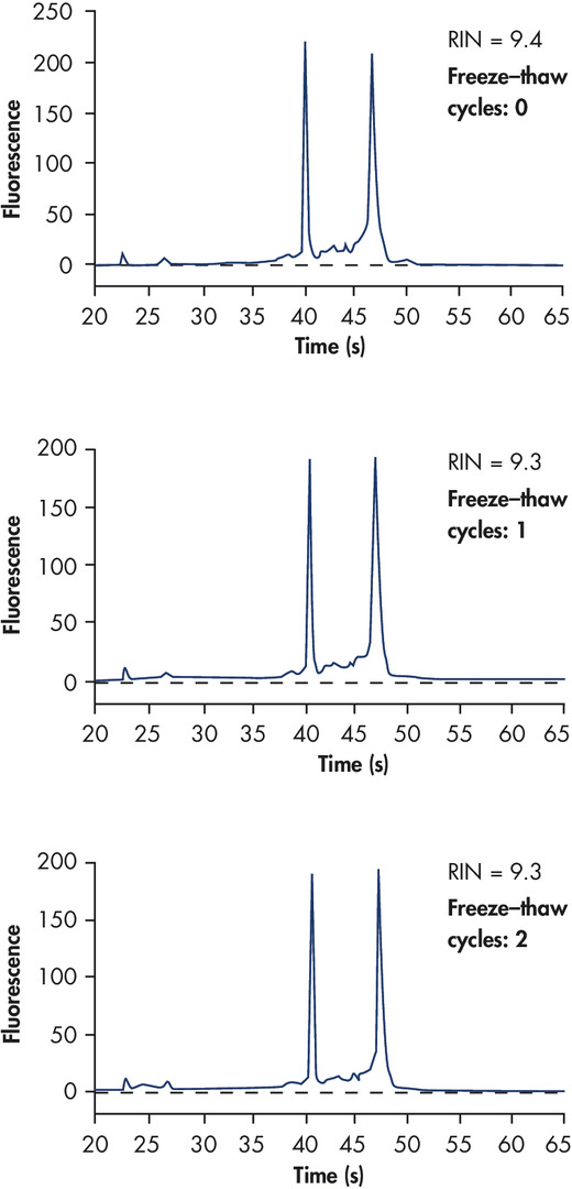 High RNA integrity after freeze–thaw cycles.