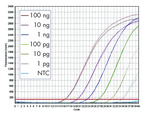 Wide dynamic range and high sensitivity in two-step RT-PCR on the Mastercycler ep realplex.