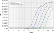 Wide dynamic range in real-time PCR.