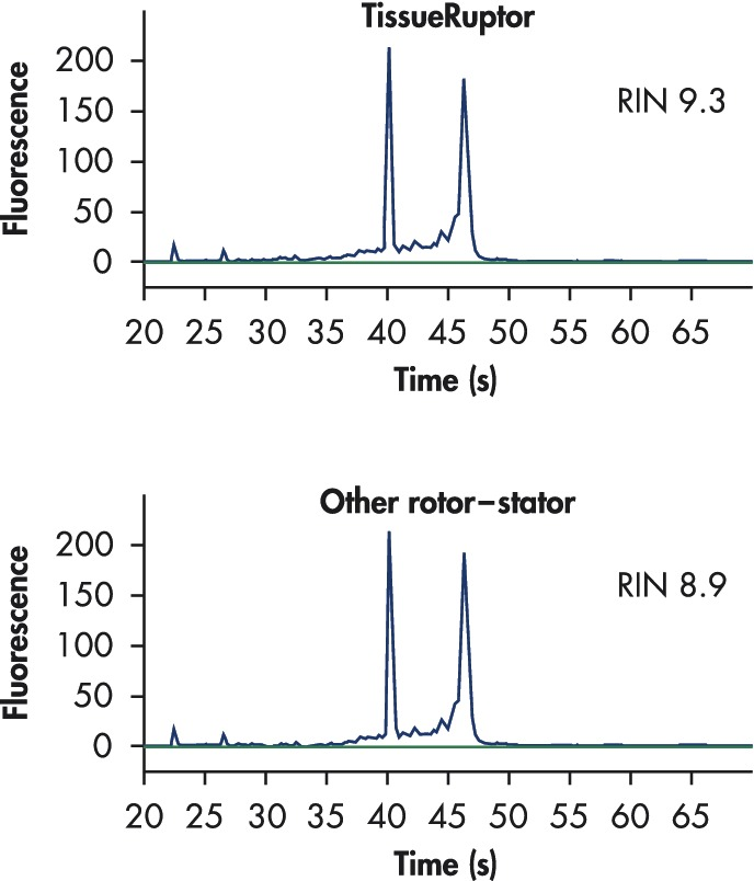 Pure RNA with high RIN values.