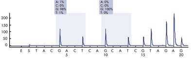 Pyrogram trace of a normal genotype in codon 12-13.