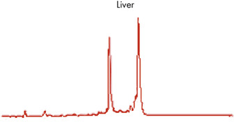 High-quality RNA from liver tissue.