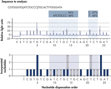 Two mutation types quantified in a single Pyrosequencing reaction