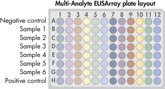 Multi-Analyte ELISArray孔板布局。